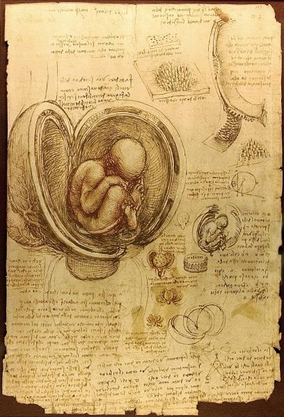 Leonardo da Vinci. Estudio de embrión. 1510-1513 Biblioteca Real. Windsor. Gran Bretaña.